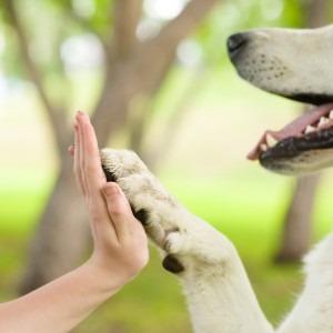 Kolagen dla psa